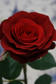 Red Rose - Chelsea