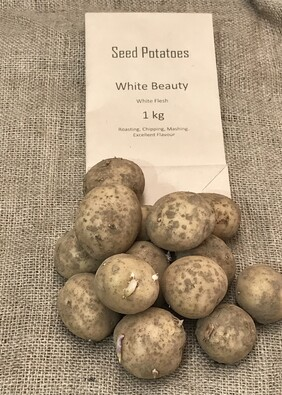 Seed potatoes First Grade White Beauty 1 kg