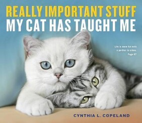 REALLY IMPORTANT STUFF MY CAT TAUGHT ME