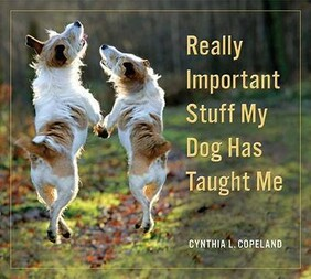 REALLY IMPORTANT STUFF MY DOG TAUGHT ME