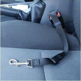 Seat Belt for your dog - Keeping Safe/stopping the worst from happening