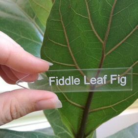 Indoor Plant Name Markers - Clear Acrylic - preorder