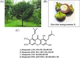 Matakana Mangosteen 100gm pouch 10:1 concentrated powder