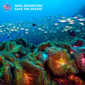 PADI Open Water e-Learning ( e learning only)