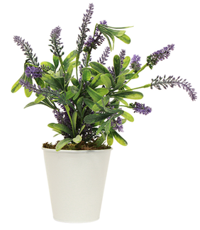 French Country Potted Lavender Large 28cmLx16cmWx40cmH
