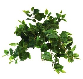 Flower Systems Puff Philo Hanging Bush