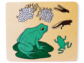 Frog Cycle Puzzle