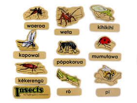 Insects Magnetics Maori