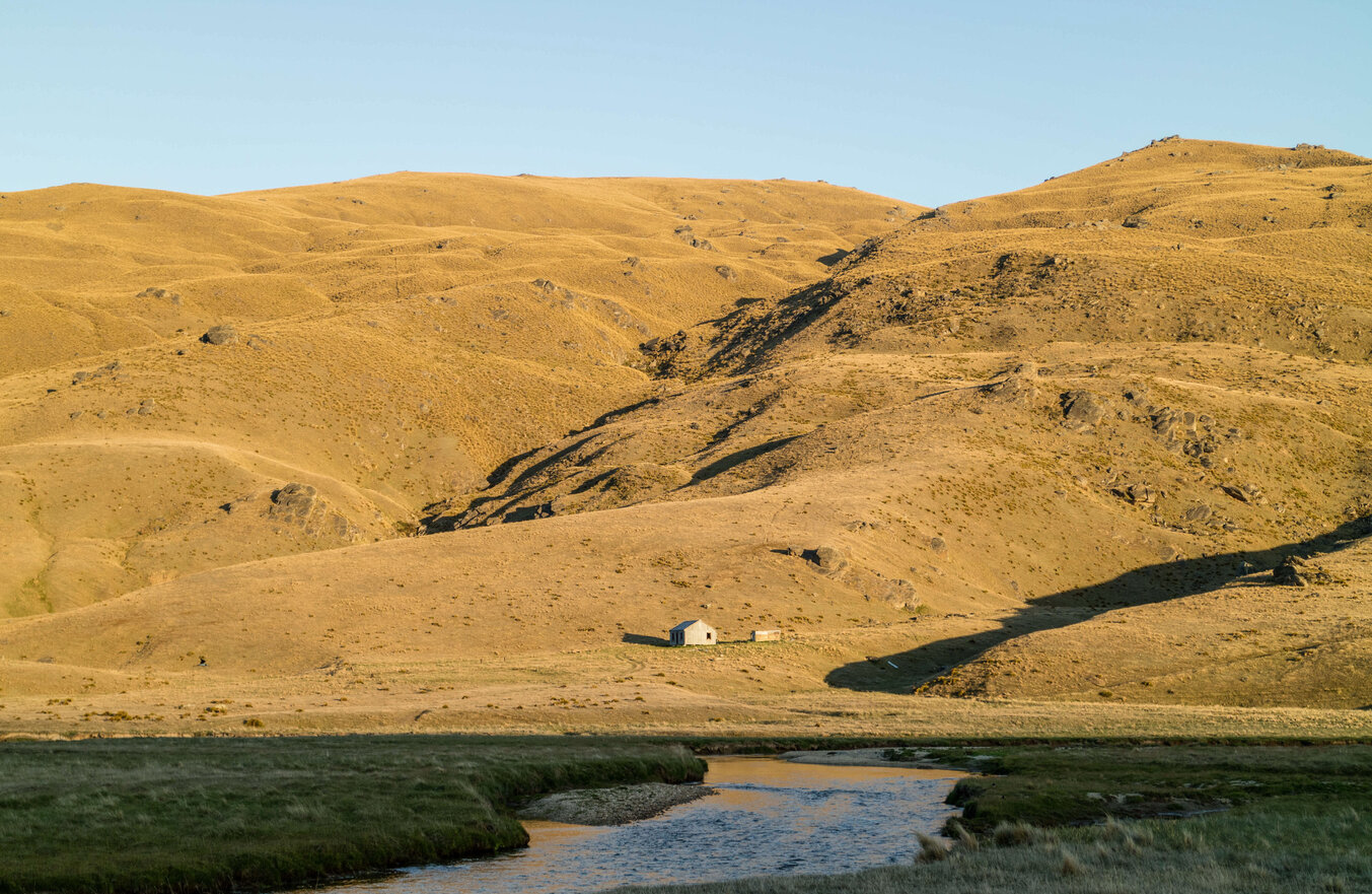 Summertime dry fly fishing Otago NZ Todd Adolph