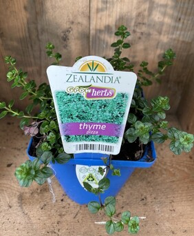 Thyme Pizza