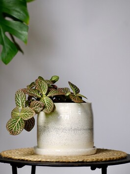 Hannah McKay Planter with saucer - Dotted White