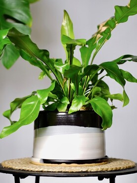 Hannah McKay Planter with saucer - Black & White