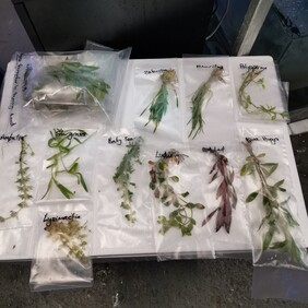 $20 Plant Pack