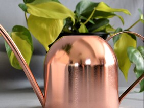 Rose gold Watering Can