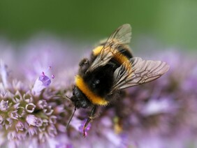 Bee Keepers (Amongst Others) Needed in South Asia