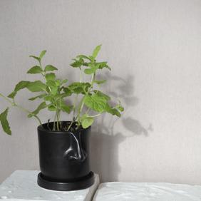Nose Herb Planter